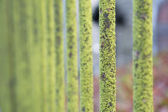 Green rusty steel bar. With green moss Royalty Free Stock Photo