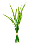 Green rye spikes. (Secale cereale), on white background Stock Images