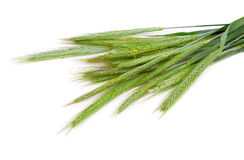 Green rye spikes (Secale cereale). On white background Stock Image