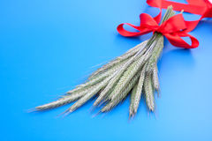 Green rye spikes (Secale cereale). On blue background Stock Photo