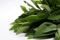 Green sage leafs. On a white royalty free stock photo
