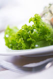 Green Salad. Royalty Free Stock Image