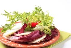 Green salad Royalty Free Stock Photos