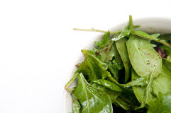Green salad. A bowl of healthy greens including spinach and endive salad Stock Photos
