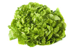 Green salad Stock Images
