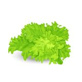 Green salad. Vector illustration of fresh green salad on the white background Stock Photography