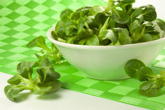Green salad. Tufts of green salad leaves in a bowl Royalty Free Stock Photos