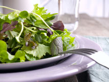 Green salad. Of mixed baby greens with sunflower sprouts Stock Photo