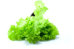 Green salad. In on pot on white background Royalty Free Stock Photo