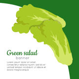 Green Salad Banner. Healthy Food Concept. Vector Royalty Free Stock Image