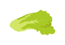 Green Salad Banner. Healthy Food Concept. Vector Royalty Free Stock Images