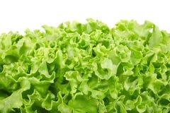 Green salad border Stock Photo