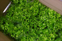 Green salad in box Royalty Free Stock Photography