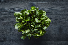 Green salad centered on dark wooden surface Royalty Free Stock Images