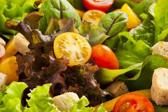 Green salad close up Royalty Free Stock Photography