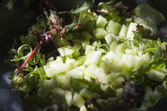 Green salad in close up Royalty Free Stock Images