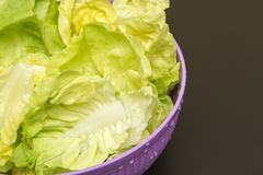 Green Salad. Close Up of green salad leaves, in a purple container stock photos