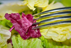 Green salad on the fork. Close-up of a salad on a fork Stock Photography