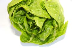 A green salad Stock Images
