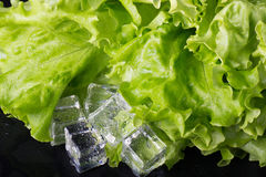 Green salad and ice cubes on black wet table. Selective focus Royalty Free Stock Photography