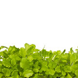 Green Salad Isolated on White Royalty Free Stock Images