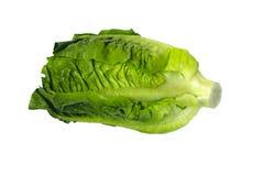 Green salad Royalty Free Stock Photography
