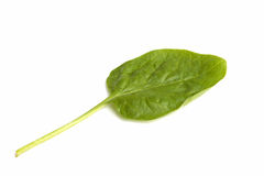 Green salad leaf Stock Images
