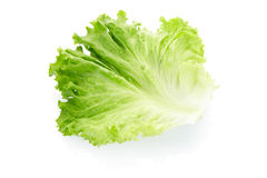 Green salad leaf royalty free stock photos