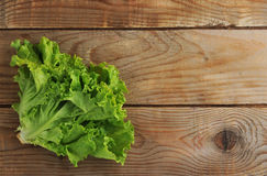 Green salad leaf on background copy space Royalty Free Stock Image