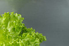 Green salad leaf closeup ia na corner with grey background Stock Photography