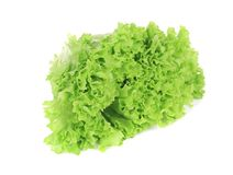 Green salad leaf. Royalty Free Stock Image