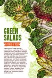 Green salad sketch banner of fresh leaf vegetable. Green salad leaf vegetable banner with natural and fresh farm veggies. Lettuce salad, chinese cabbage napa and royalty free illustration