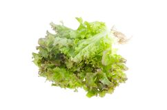 Green salad leafs. Lettuce isolated on white background. stock photos