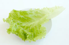 Green salad leaves. On the plate Stock Photos