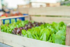 Green salad leaves on market stall detail Stock Photography