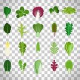 Green salad leaves on transparent background. Green salad leaves. Vector vegetarian healthy food leaf set isolated on transparent background Stock Images