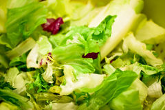Green salad macro Royalty Free Stock Images