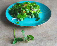 Green salad on the plate Royalty Free Stock Photo