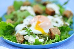 Green salad with poached egg. Royalty Free Stock Image