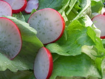 Green salad with radish Stock Image