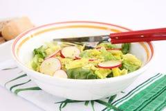 Green salad with radish Stock Image