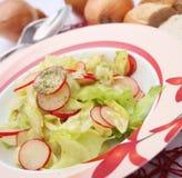 Green salad with red radish Stock Image