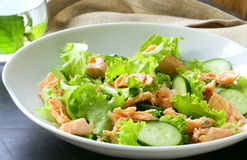 Green salad with salmon Stock Photography