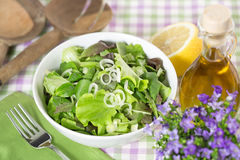 Green salad and seasoning Stock Images