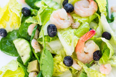 Green Salad with Shrimps on Light White Background, Healthy Eating Concept, Paleo Diet Stock Photos
