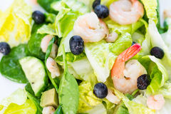 Green Salad with Shrimps on Light White Background, Healthy Eating Concept, Paleo Diet Royalty Free Stock Image