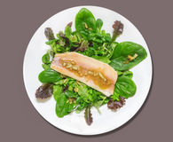 Green Salad of spinach leaves and smoked trout Stock Image