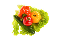 Green salad and tomato Stock Images
