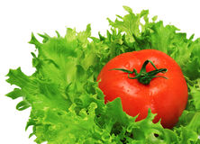Green salad and tomato Royalty Free Stock Photo