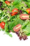 Green salad and tomatoes Stock Photo